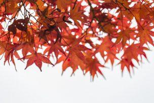 9月・長月の時候の挨拶【例文つき】