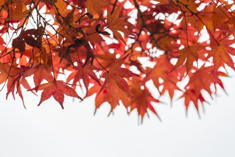 時候 の 挨拶 9 月 中旬 9月中旬の時候の挨拶:招待状やお礼状・祭りの挨拶の例文と書き方