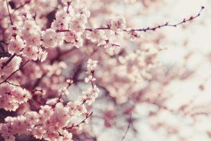 4月・卯月の時候の挨拶【例文つき】